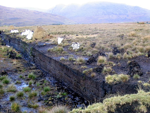 Freshly cut peat, showing peat drying (larger stacks protected by hay) and dried peat bagged in plastic ready to be hauled off. The vertical peat wall is draining and partially drying out before being cut. Photo by Amos