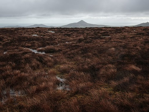 Thick bog covering the higher slopes Tonduff, Wicklow, Ireland Photo by Rob Hurson