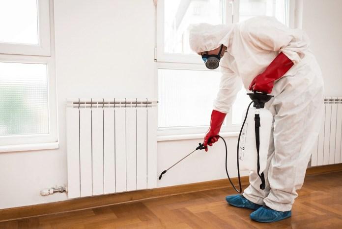 come eliminare gli scarafaggi dalla propria casa