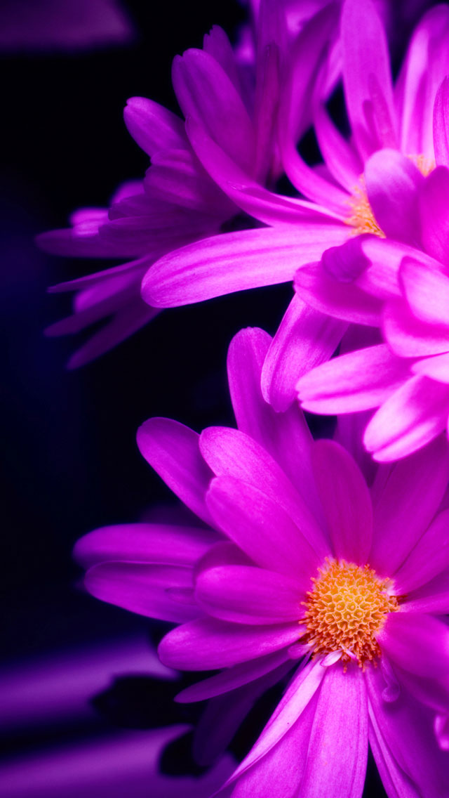Cute Pink Wallpaper For Phone 50 Most Demanding Retina Ready Iphone 5 Wallpapers Hd