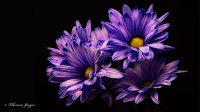 10 Beautiful High Resolution Purple HD Wallpapers for ...