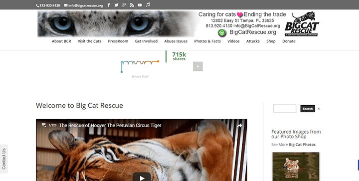 Big-Cat-Rescue 15 Classy Divi Websites For Your Inspiration