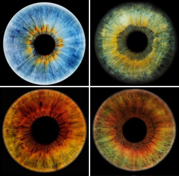 John Rankin Focus Eyes