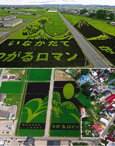 """L'image """"https://i0.wp.com/www.designboom.com/weblog/images/rice_big.jpg"""" ne peut être affichée car elle contient des erreurs."""