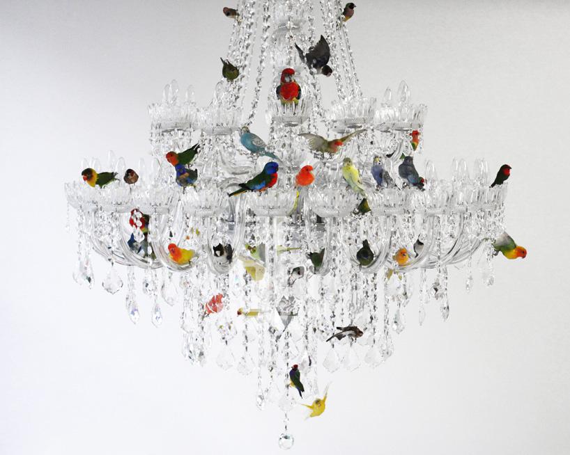 sebastian errazuriz perches taxidermied birds on a chandelier