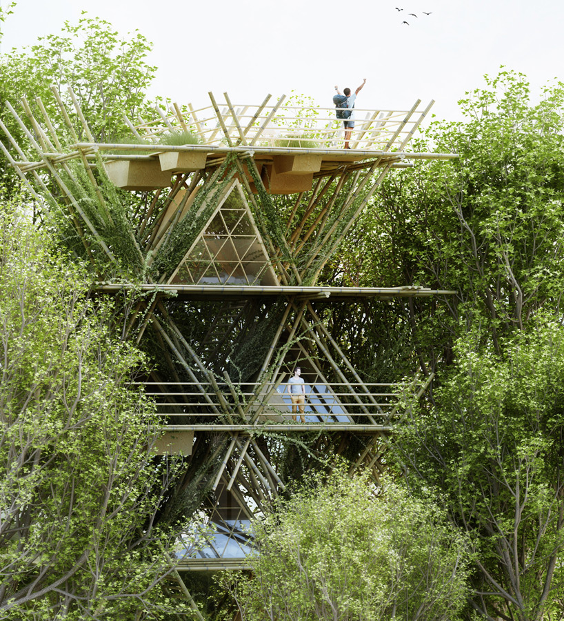 penda places visitors among birds with modular bamboo