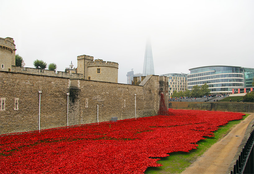 888,246 ceramic poppies infill the tower of london for remembrance day