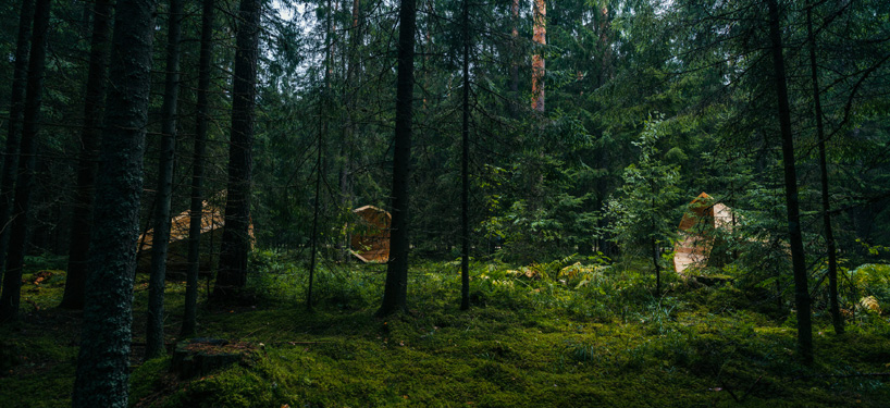 Fall Wooden Wallpaper Estonian Students Amplify Forest Ambiance With Megaphone