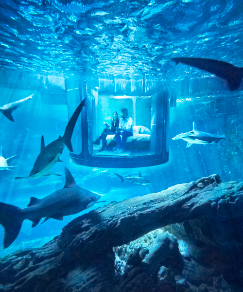 airbnb offers underwater shark suite with 360 glass walls