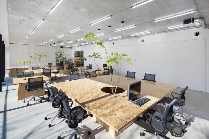 schemata architects brings plant life into tokyo office space