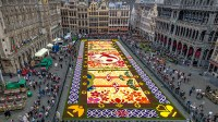 600,000 blooms form flower carpet at brussels' grand place