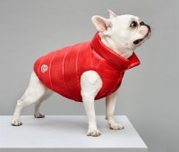 moncler dog jacket keeps your pooch toasty and trendy