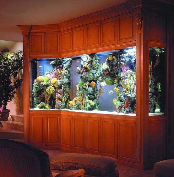 Idee per un acquario in casa  DesignBuzzit