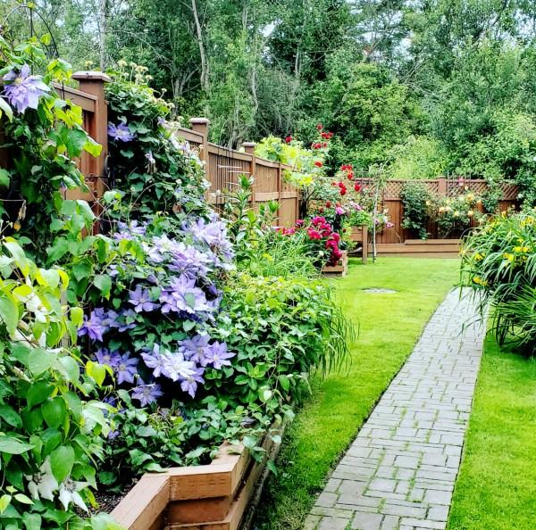 Garden path to my backyard
