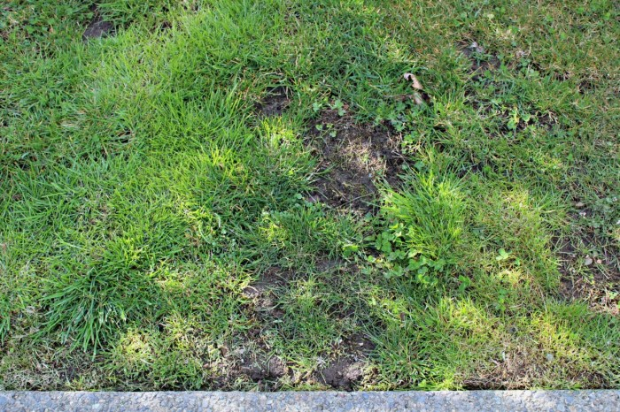Six week yard transformation challenge week one. Get your yard ready for spring