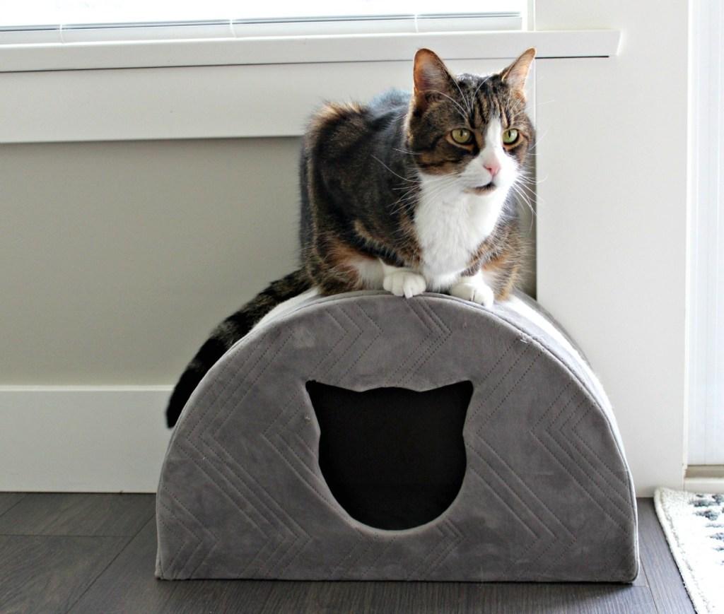 Angus the tabby|tabby cat| cat house| pet palace|#angusthetabby