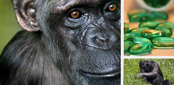 Exemplo de aplicação na medicina. Estudar toda a variedade de plantas que temos demoraria milhares de anos! Observando os chimpanzés foi descoberto como uma planta, a vernonia, servia de remédio contra parasitas do intestino.