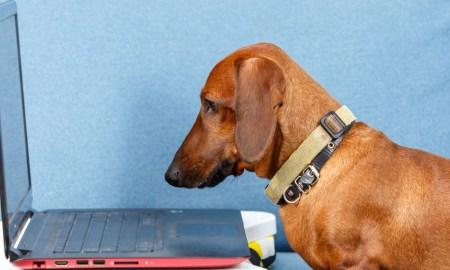Smart dog gazing at notebook screen