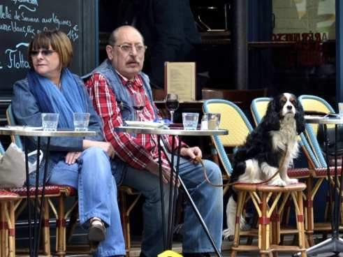 Outdoor Cafe with Dog
