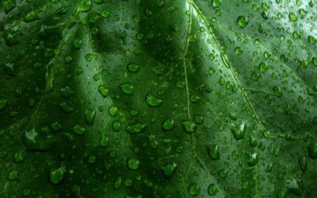 Earth Leaf 50 cool free desktop wallpapers