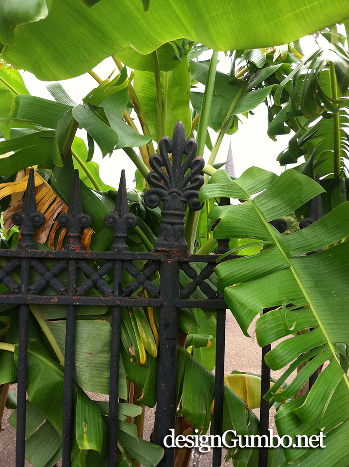 Banana Leaves and Wrought Iron gate in Jackson Square, NOLA