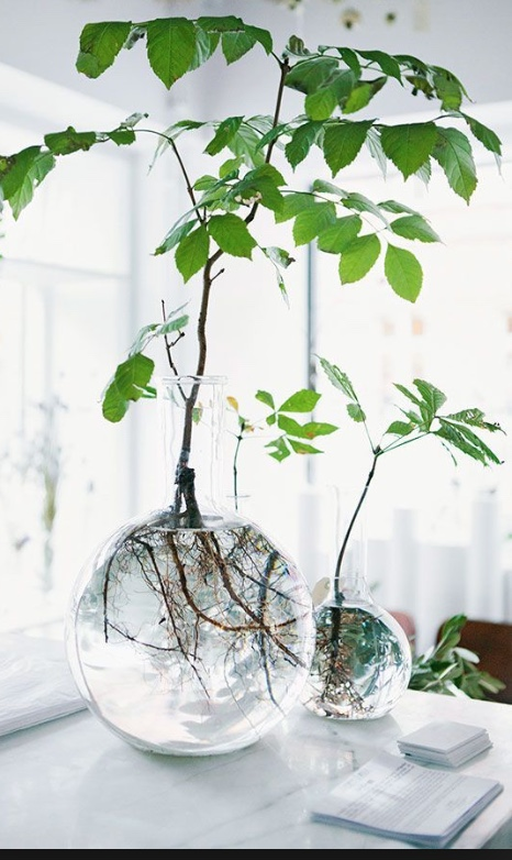 deccorating with simple greenery