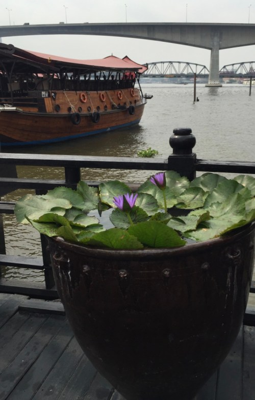 water lilies in pot