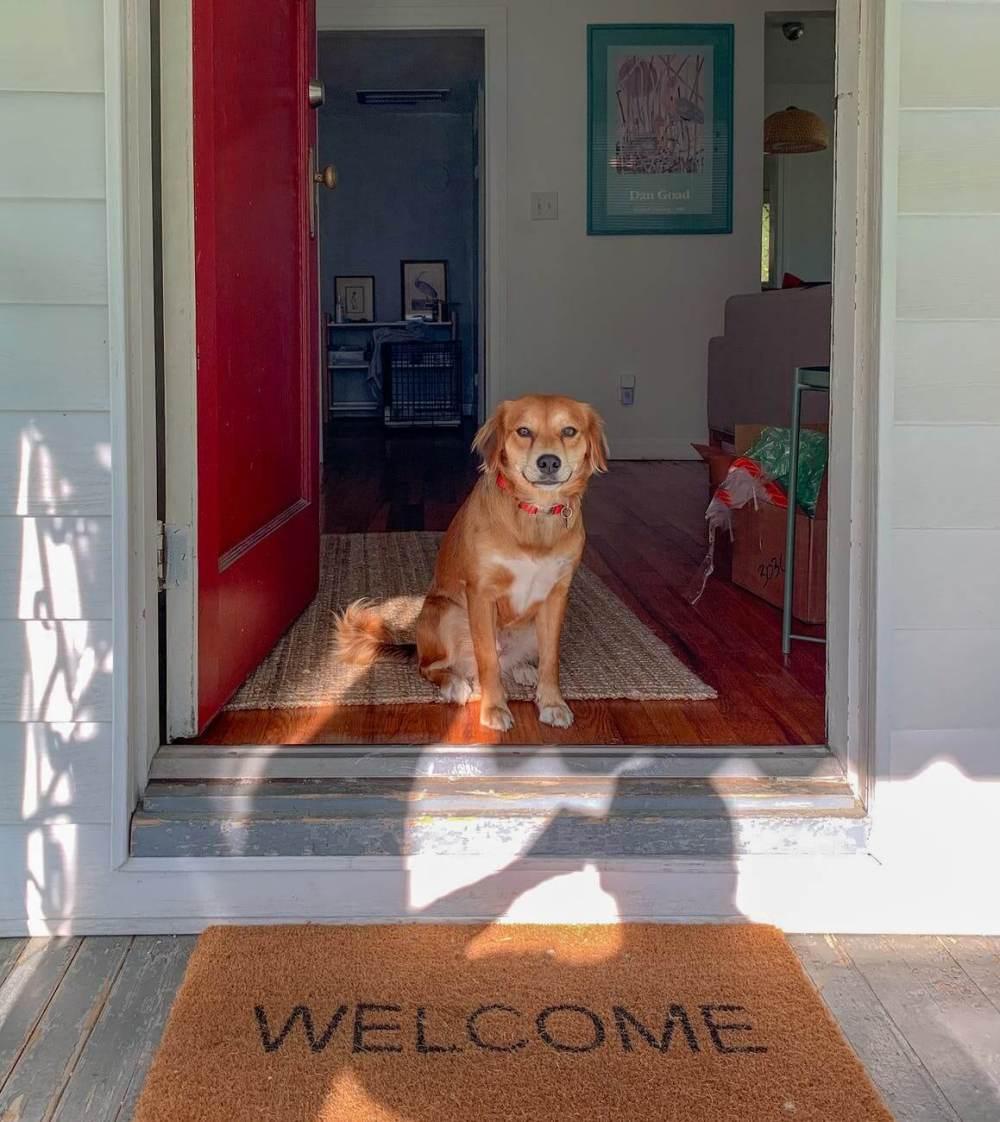 brown short coated dog sitting on brown wooden floor