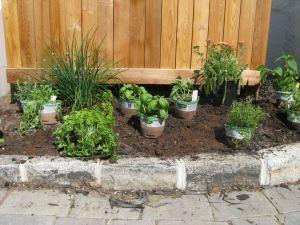 Herb Garden Design FCBO
