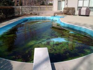 Opening A Swimming Pool HzOD