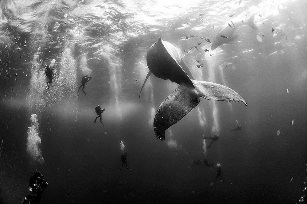 ©-Anuar-Patjane-Floriuk-Whale-Whisperers