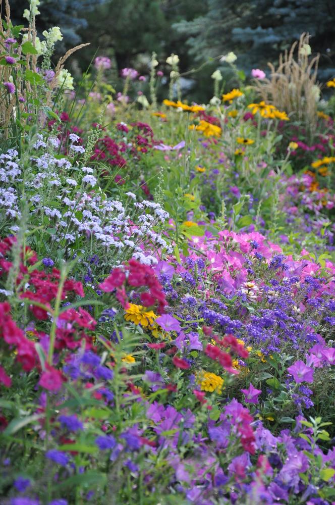 Colorado Perennial  Annual Gardens  Designscapes Colorado