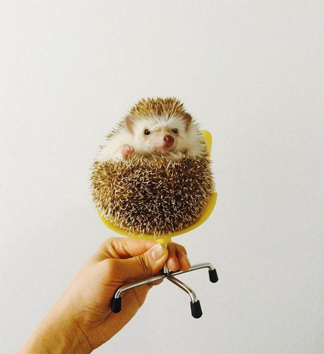 A Day In The Life of Amelia The Hedgehog + Best Of The Web