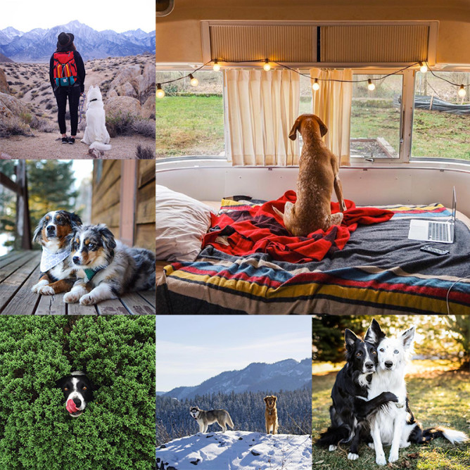 10 Adventure-Loving Dogs (& Their Owners) to Follow on Instagram