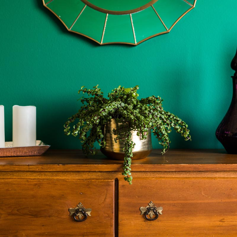 Color Inspiration Bold and Brilliant Emerald Green