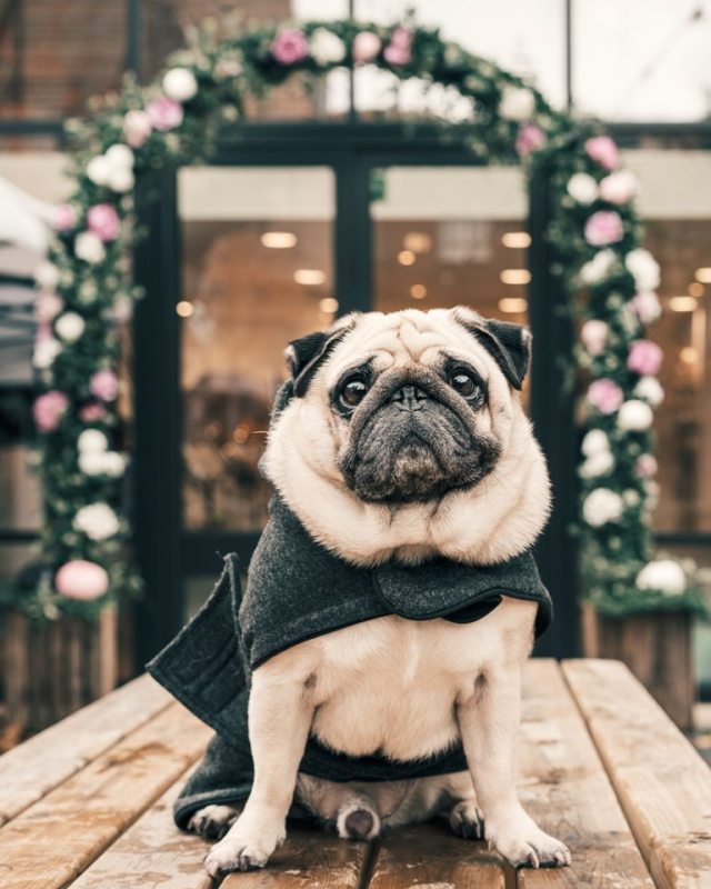 Back To Work - How To Reset Your Dog Care Routine In The New Normal