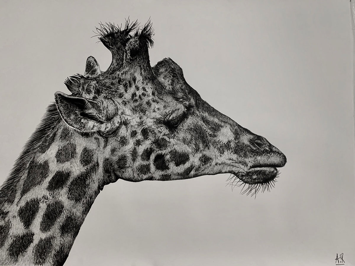 How To Draw A Giraffe With These Realistic Cartoon Drawing Tutorials