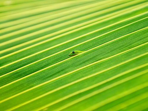 Gecko and Palm Frond Photography