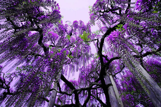 Ashikaga Flower Park, Japan Nature Photography