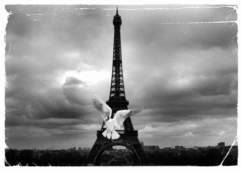 Dove in Paris urban photography