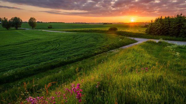 Nature Sunset Scenery