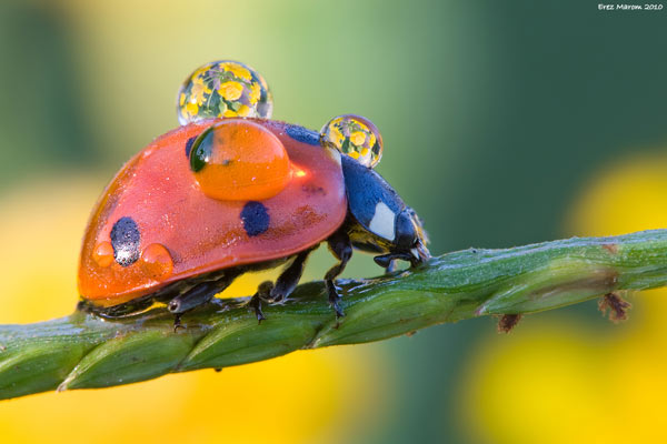 20 Spectacular Examples Of Insect Photography