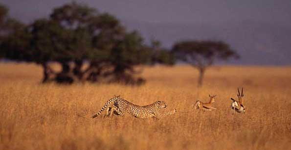 Wildlife Photos Marvelous Examples Of Killer Instinct