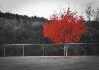 Beautiful Selective Color Photos