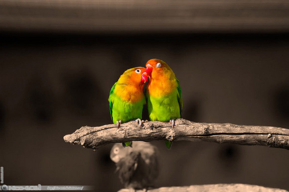 Fascinating Bird Photos By Great Photographers