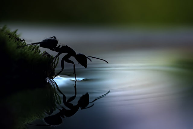 Mind Blowing Insect Pictures and Professional Tips