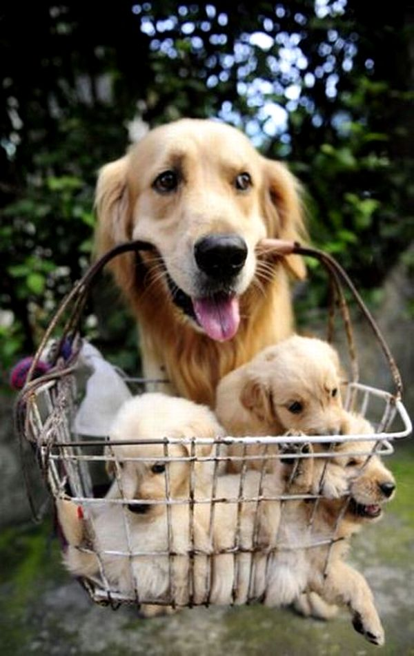 Cutest Puppy Pictures And Pet Photography Tips