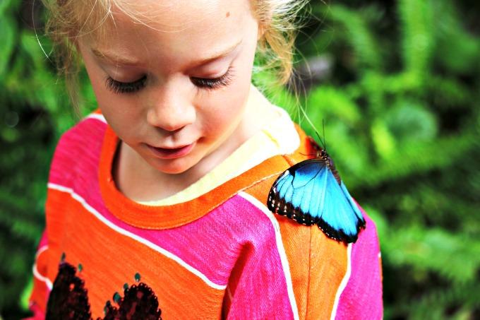 Butterfly-interaction-san-diego-zoo-safari-park
