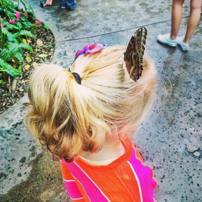 butterfly-on-head
