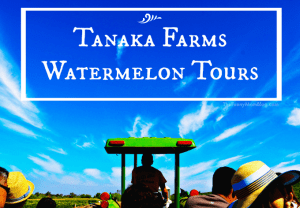 A 50 Minute Tour of the Juiciest Proportions: Tanaka Farms Watermelon Tour